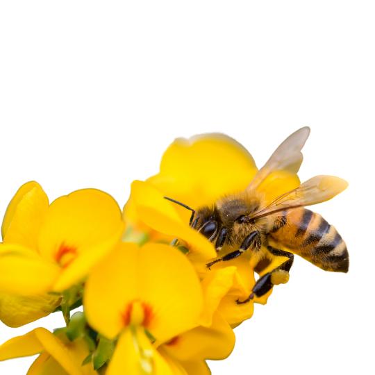 produzione-del-miele-naturale-siciliano-coriruci